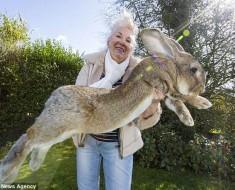 conejo-mas-grande-1