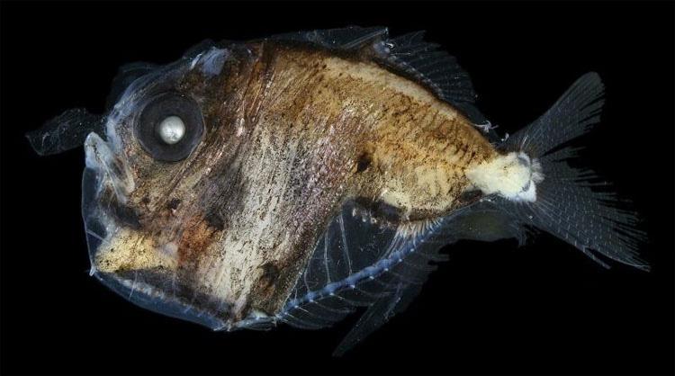 7 de las más aterradoramente extrañas criaturas del océano