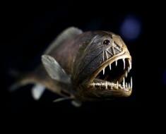 criaturas-extranas-oceano-8