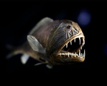 7 de las más aterradoramente extrañas criaturas del océano. ATENCIÓN a la última 1