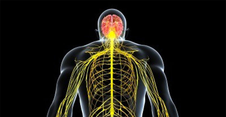 10 datos alucinantes sobre el cuerpo humano que probablemente no sabías