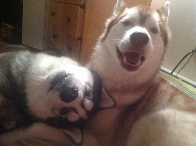 22 fotos ADORABLES de perros que demuestran que dos es mejor que uno