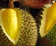 Durián (o durión), la fruta MÁS APESTOSA del mundo