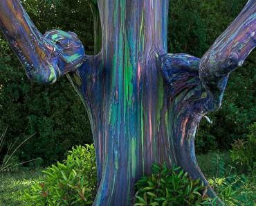 Estos árboles parecen pintados a mano, pero este tipo de belleza SÓLO aparece en la Naturaleza 1