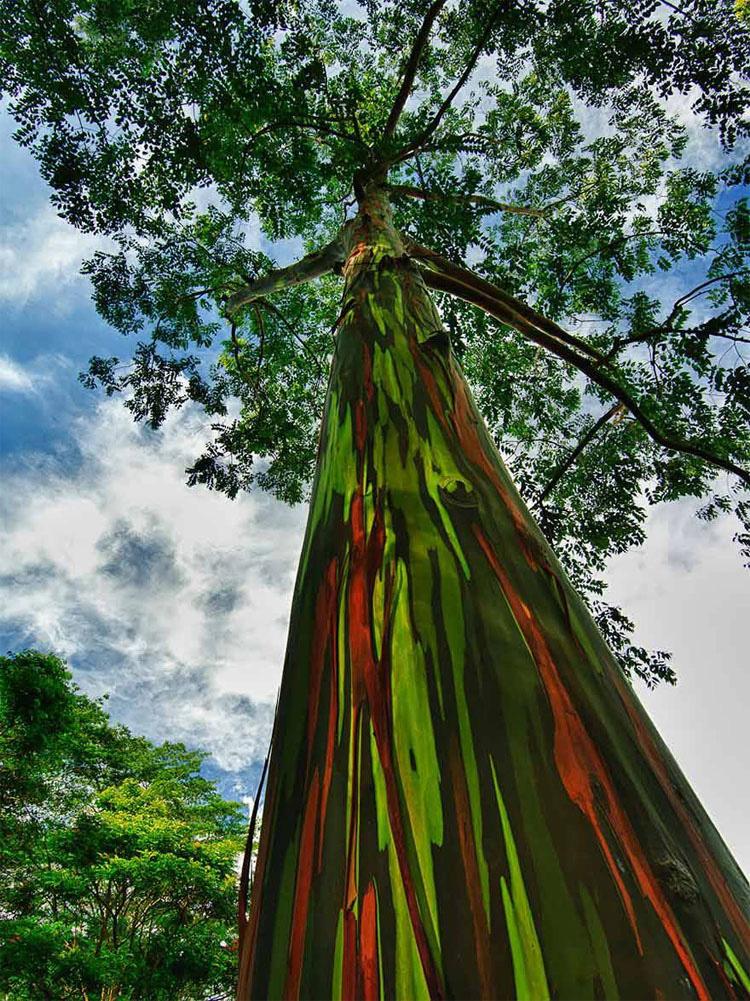 Estos árboles parecen pintados a mano, pero este tipo de belleza SÓLO aparece en la Naturaleza