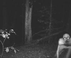 fantasma-bosque