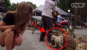 ESTO TIENE QUE ACABAR. El terrible festival de carne de perro de Yulin