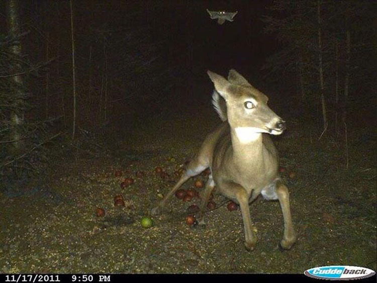 Lo que 14 cazadores filmaron con sus cámaras le dará PESADILLAS