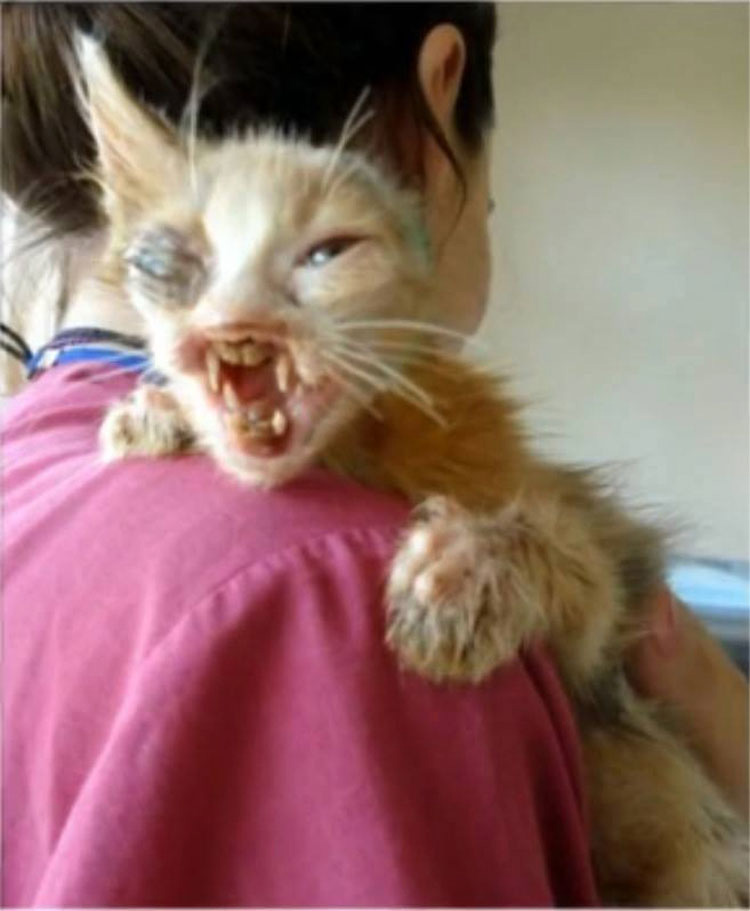 Gatita DEJADA MORIR en las calles sufre una transformación impresionante, gracias al cuidado de una niña