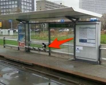 Este gato lleva esperando aquí DURANTE 10 años... y nadie sabe por qué 2