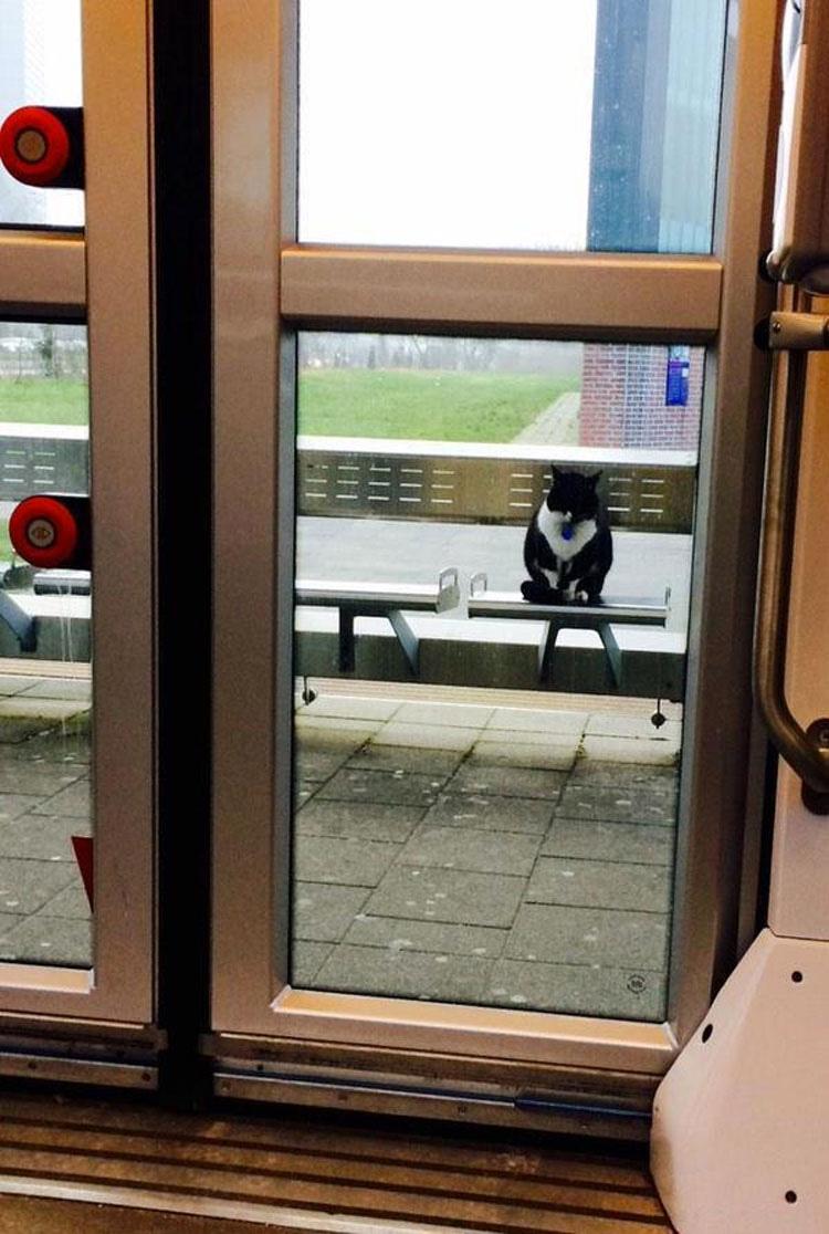 Este gato lleva esperando aquí DURANTE 10 años... y nadie sabe por qué
