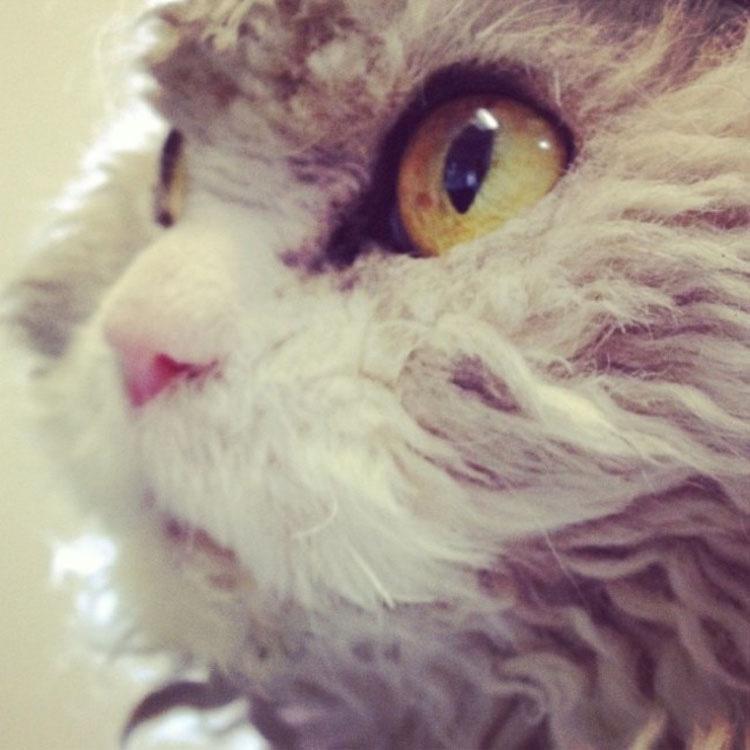 Busca en Instagram todo lo que quieras, no encontrarás un gato más ATERRADOR que Albert