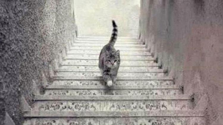 Esta imagen divide a Internet: ¿El gato sube o baja las escaleras?