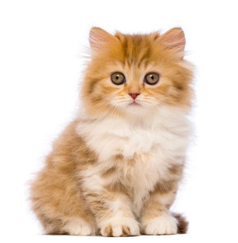 14 razones por las que tener un gato es MUCHO MEJOR que tener un novio o novia