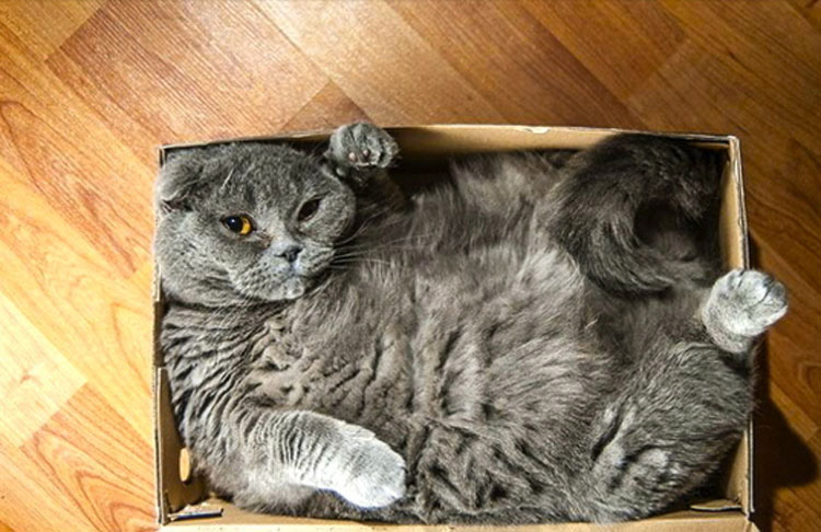 15 gatos que se niegan a aceptar que sus cajas son demasiado PEQUEÑAS