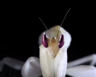 Mirar fijamente a los ojos de estos insectos es como mirar dentro del alma de un EXTRATERRESTRE