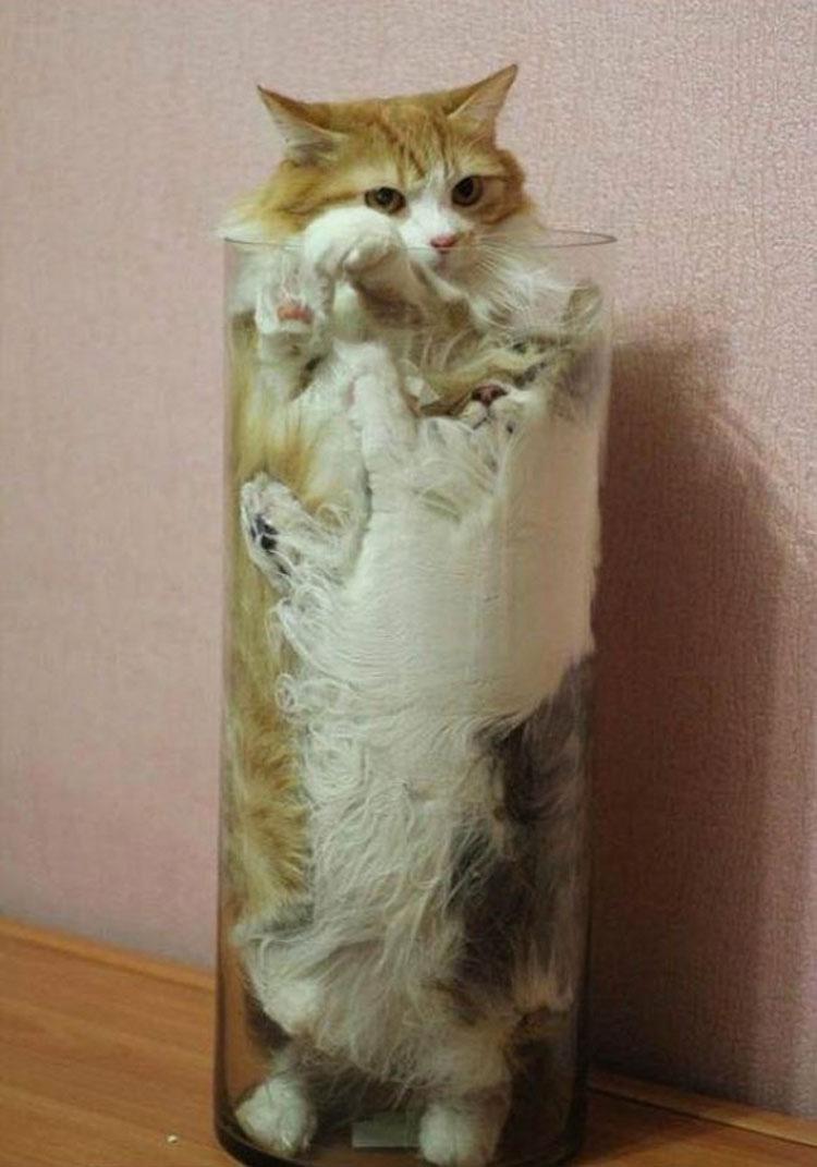 24 mascotas que han encontrado la forma de encajar de forma SORPRENDENTE (y divertida)