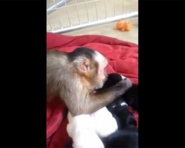 Esto es lo que ocurre cuando un mono se reune con perritos recién nacidos por primera vez