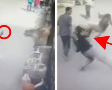 Un tipo hace un gesto grosero a un mono, lo que ocurre después te hará REÍR de forma cómplice