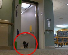 Cada día, este pequeño perro hace un viaje por sí misma que te dejará en lágrimas