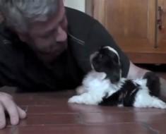 Los cosas MÁS ADORABLES suceden cuando te pones al nivel de un cachorro