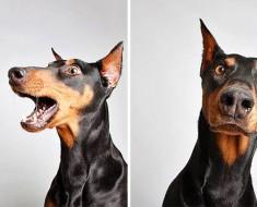 Estos adorables retratos de perros abandonados están haciendo que los adopten. ¡MARAVILLOSOS!