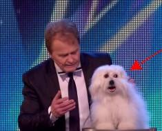 """Un """"perro que habla"""" sorprende a los jueces del concurso de talentos briánico. ¡REIRÁS como ellos!"""