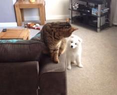 El nuevo cachorro se encuentra con el gato por primera vez... ¡En el minuto 1:14, no dejarás de reír!
