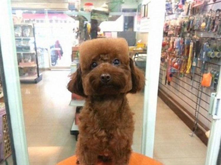 """Perros con la """"cara cuadrada"""" son la última tendencia en Taiwán. ¿Por qué? No lo sé"""