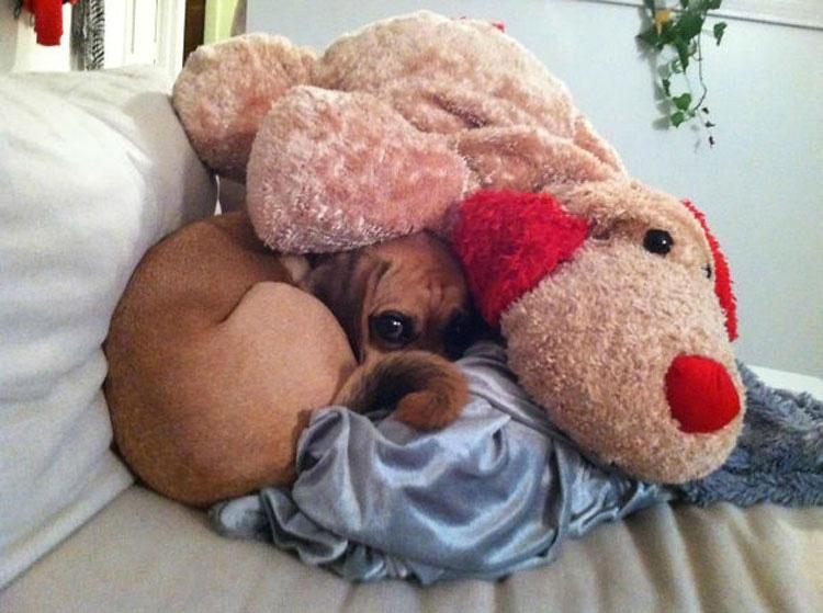 15 perros que son terriblemente GRACIOSOS y divertidos al ESCONDERSE