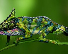 Este camaleón está hecho en realidad con pintura corporal sobre dos mujeres. ¿Las ves?