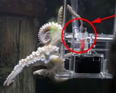 Un pulpo fue entrenado para hacer fotografías a los visitantes de un acuario en tan sólo tres intentos