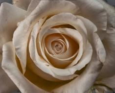 Pasó 4 meses fotografiando flores, el resultado es éste INCREÍBLE vídeo