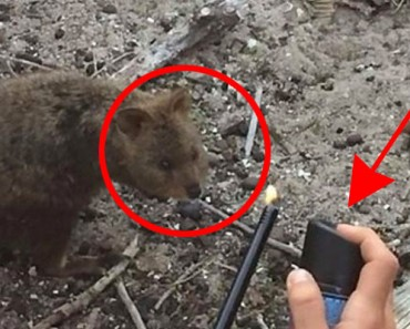 Castigan a turistas franceses que QUEMARON a un pequeño marsupial mientras lo filmaban