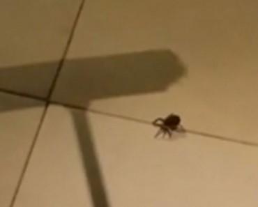 Cuando veas la venganza de esta araña no volverás a matar ninguna más