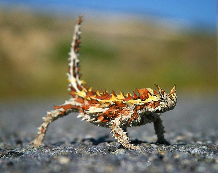 9 animales impresionantes que parecen míticos... Pero que son totalmente REALES