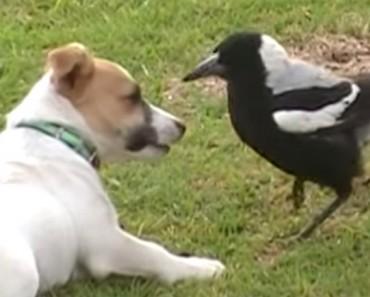 Este perro y el pájaro son ADORABLES... Pero ESPERA a que el pájaro le ayude con la lavandería