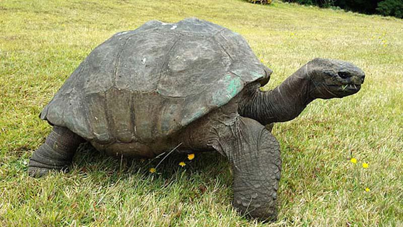 Esta tortuga fue fotografiada en 1902. Así es como está 100 años después el animal terrestre más viejo del mundo