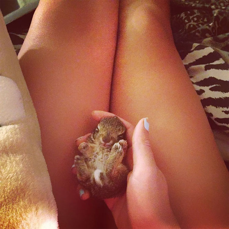 25 animales que caben en la palma de tu mano. ¡La #17 es increíblemente tierna!
