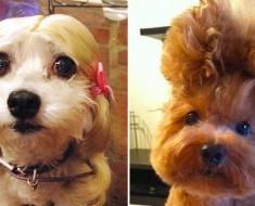 Estos 24 animales han tenido un gran día en la peluquería, y están ABSOLUTAMENTE ADORABLES