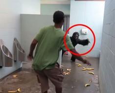¿Qué pasaría si entras a un baño público y te encuentras con un gorila? Pues ÉSTO...