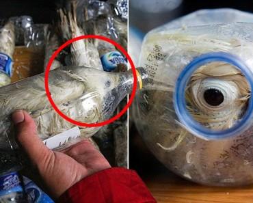 CRUELDAD de contrabandistas: rescatan a cacatúas que estaban EMBOTELLADAS en botellas de plástico
