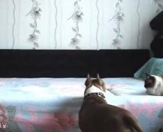 El dueño de este perro pone una cámara oculta. ¡ESTO es lo que hizo su perro!