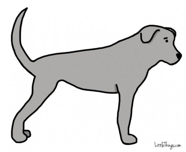 La cola de tu perro revela información secreta. ¡Aprende lo que ESTÁ diciendo!