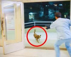 Este perro siguió a su dueño al hospital. Lo que sucede después es DESGARRADOR
