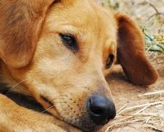 Actua rápido si ves que tu perro hace ESTO, es un signo de una enfermedad mortal que quizás no conoces