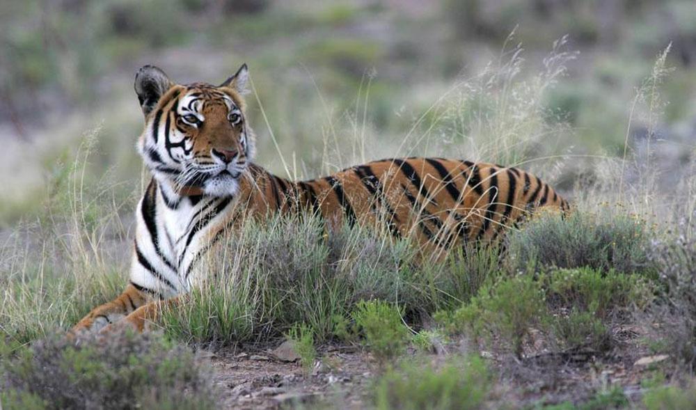 10 animales magníficos que lo más probable es que verás como se EXTINGUEN durante tu vida
