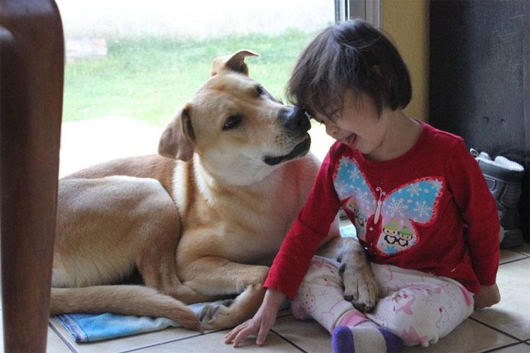 12 Frases Inspiradoras Que Todo Amante De Los Perros Debe Saber
