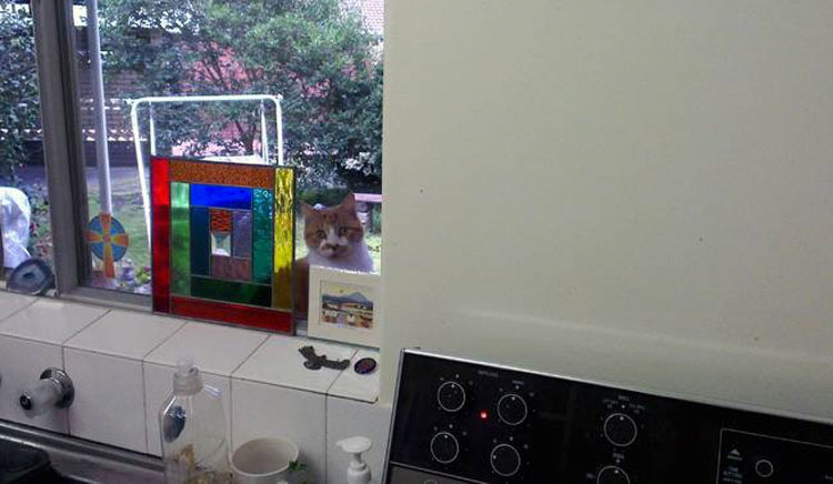 19 gatos que están teniendo una crisis vital porque no se les permite entrar