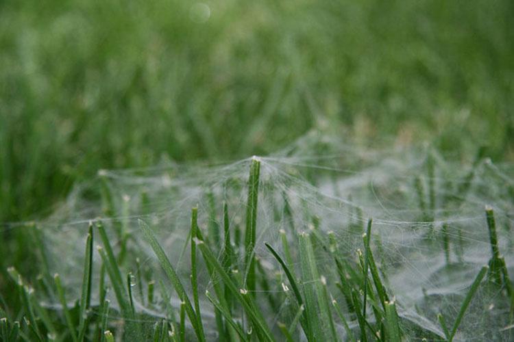 Millones de arañas han estado cayendo del cielo en Australia. ¿TE IMAGINAS?